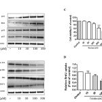 Figure 2: (A) Effect of trioelin on p53, p27, Bax and p21 protein expression in dose-dependent manner in MCF-7 cells. Cells were treated with various concentrations of triolein and then cells were harvested to subject to western blot analysis (n=3). (B) Effect of triolein in dose-dependent on Cyclin D1, phospho-Rb, Rb and E2F1 protein expression (n=3). (C) Cell viability after treatment of triolein in MCF-7 cells by MTT assay (n=4). (D) Effect of triolein on DNA synthesis by BrdU assay (n=4). *, p