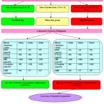 Figure 1: Algorithm of diagnosis and prognosis of obstetric and perinatal complications at chronic pyelonephritis