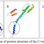Figure 4: Prediction of protein structure of the C-terminal part Cag AH.