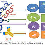 Figure 2: Factors that impact PK properties of monoclonal antibodies