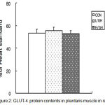 Figure 2: GLUT-4 protein contents in plantaris muscle in rats.