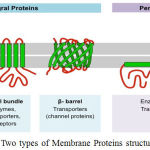 Figure 1: Two types of Membrane Proteins structure
