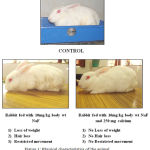 Figure 1: Physical characteristics of the animal