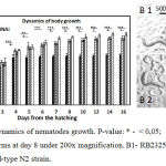 Figure 1: A. Dynamics of nematodes growth. P-value: * - < 0,05; ** - < 0,01; *** - < 0,001. B. Worms at day 8 under 200x magnification. B1- RB2325 cSesn knockout strain, B2 - wild-type N2 strain.