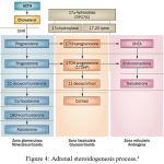 Figure 4: Adrenal steroidogenesis process