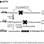 Figure 5: Steroidogenesis in CAH caused by21-hydroxylase enzyme deficiency.3