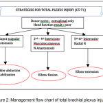 Figure 2: Management flow chart of total brachial plexus injury.3