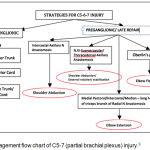 Figure 3: Management flow chart of C5-7 (partial brachial plexus) injury.3