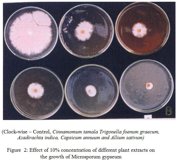 Antifungal Potential of Aqueous Extract of Some Traditional