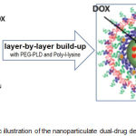 Figure 1: Schematic illustration of the nanoparticulate dual-drug delivery system.