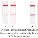 Figure 2: Test strips showing different staining patterns based on changes in analytical conditions in the absence of Tet in serum samples.