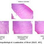 Figure 14: Histopathological examination of Heart [H&E, 40X].